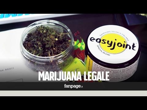 """EasyJoint, la marijuana legale arriva in Italia: """"Si può fumare liberamente"""""""