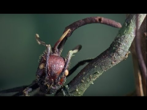 Attack of the Killer Fungi | Planet Earth | BBC Earth