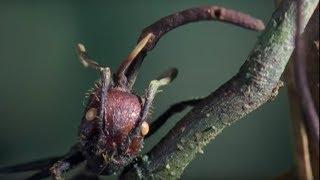 Attack of the Killer Fungi | Planet Earth | BBC Earth