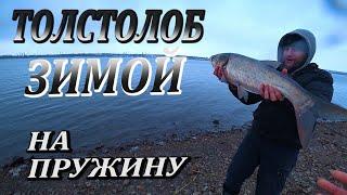Рыбалка зимой ловлю карася и толстолоба на летнюю пружину и манно гороховую прикормку