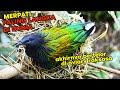 Merpati Paling Langka Di Dunia Akhirnya Bersarang Di Aviary Raksasa Ini  Mp3 - Mp4 Download