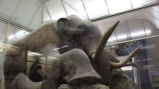 видео Ночь в Зоологическом музее МГУ