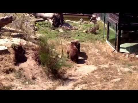 Marcelle Natureza Lugo, un zoo diferente.
