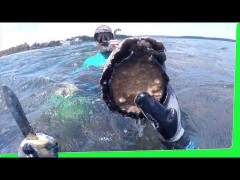 Massive Abalone, Oyster & Mussel Feast - Tasmania Seafood EP.465