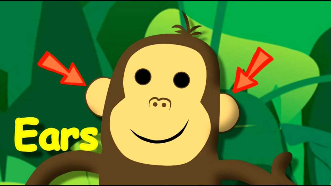 Monkey Face. Partes de la cara en ingles - YouTube