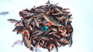 ЛЁД ПРОСЕЛ ОТ РЫБАКОВ Пулемётный клёв окуня Безмотылка Зимняя рыбалка 2020 2021 Первый лёд