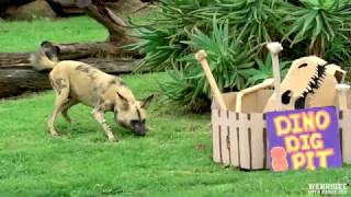 African Wild Dogs vs Dinos!