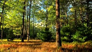 (3D binaural sound) Asmr walking through the forest/peeling tree bark