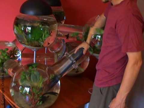 The Silverfish Aquarium - Maintenance - YouTube