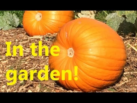 in-the-garden-and-the-pumpkin-challenge-by-whistle-thicket