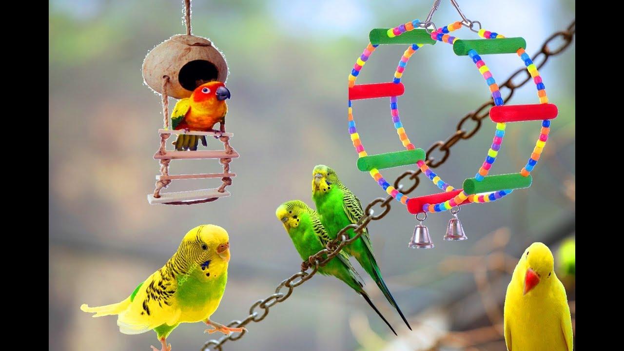 ПОПУГАЙ и СПИННЕР//Игрушки для попугая//Как волнистый попугай .