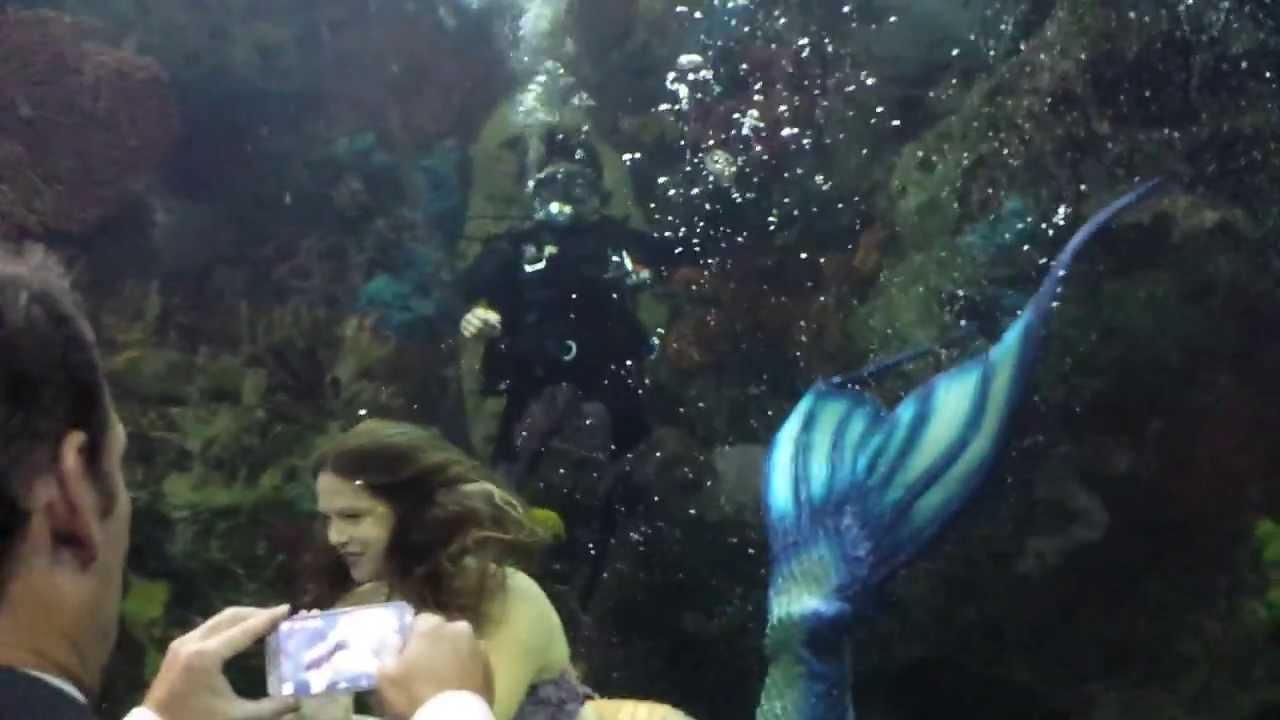 Mermaid Malena At The Virginia Aquarium Youtube