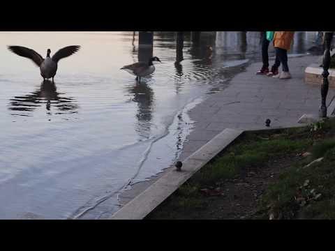 High Tide at Richmond Riverside London 2018【Video HD】(1080p) 伦敦Richmond 汤姆斯河