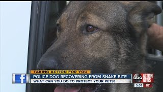 Police Dog Recovering From Snake Bite