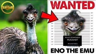10 อันดับ นกที่อันตรายที่สุดในโลก (ร้ายจริงๆ)