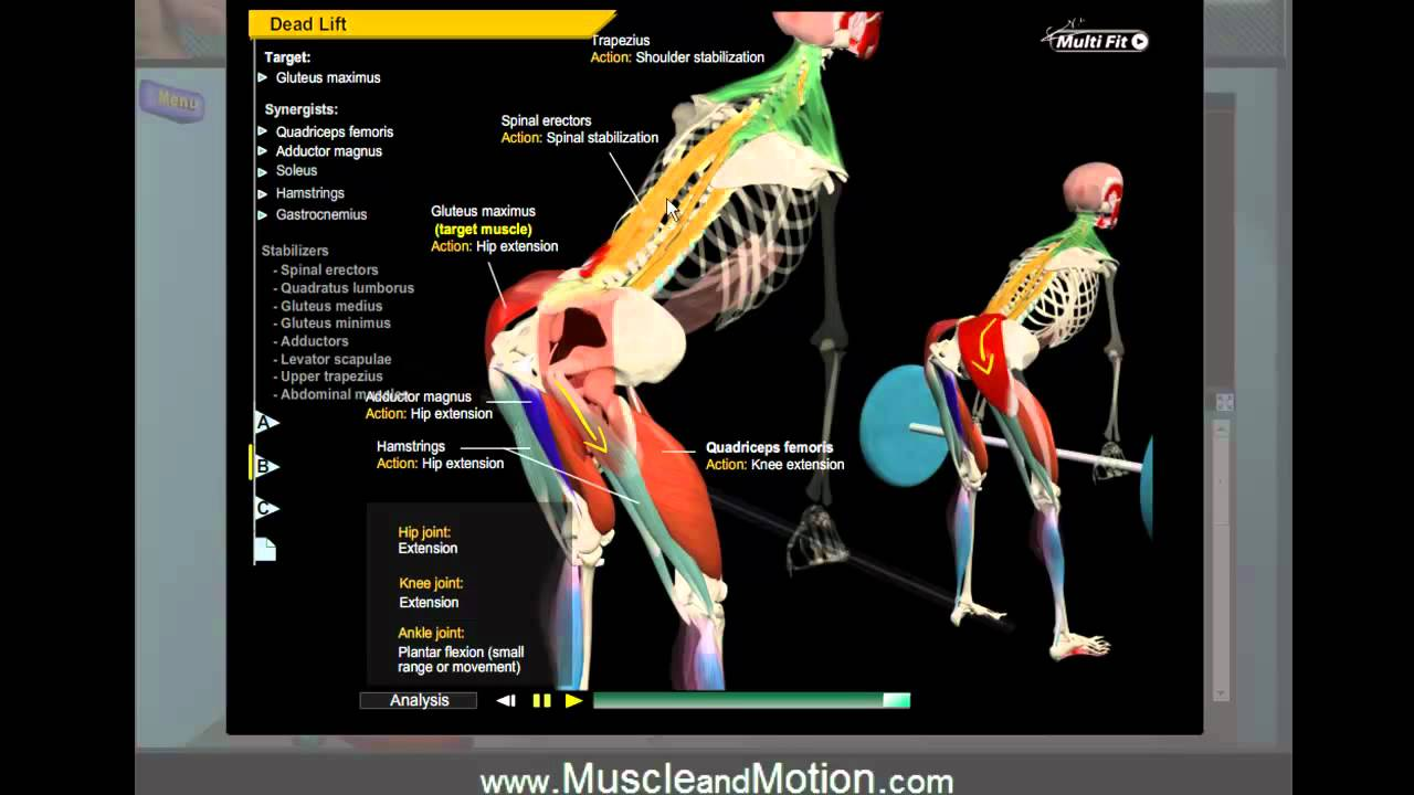 how to deadlift properly: 3d animation of muscles in motion - youtube, Muscles