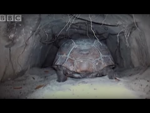 Attenborough - The wonder of the Tortoise Tunnel - BBC wildlife