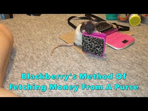 Blackberry's Method Of Fetching Money From A Purse - Final!