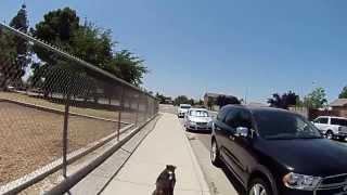 Doberman Taking Me For A Bike Ride!