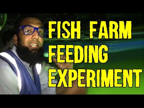 Very Successful Fish Farm Feeding Experiment