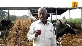 मुक्त संचार गोठा | पद्धतीचा अवलंब करून महीना | एक लाख रुपये कमावतात | success story for cow milking