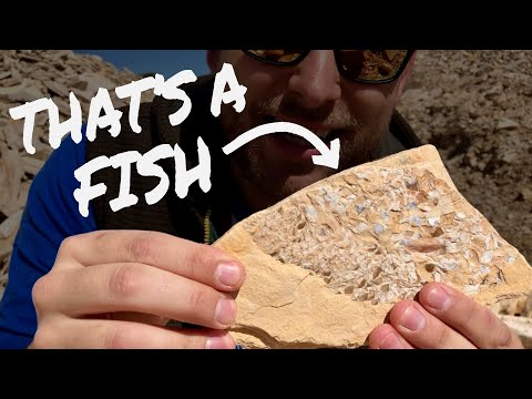 Finding Ancient Fish Fossils In Utah