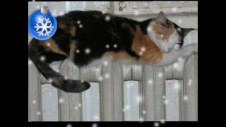 Круто! Коты под музыку тимати.