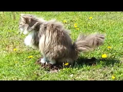 Funny Cat Poops On Mole's Head