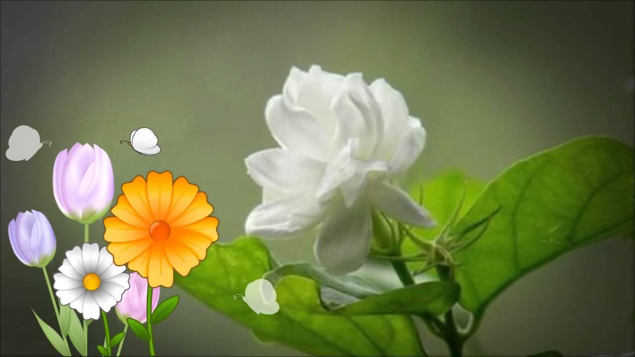 Jasmine Flower Kennyg Youtube