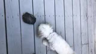 Puppy versus Tortoise