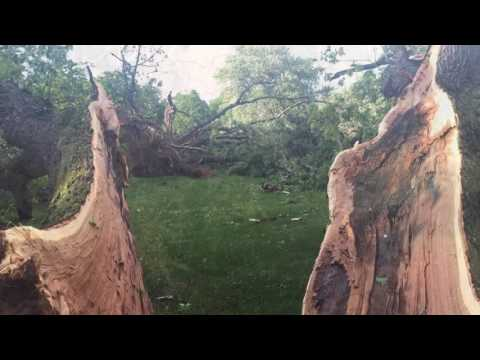Storm rips through Woodlawn Cemetery