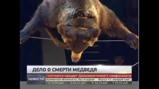 Следком проводит проверку по факту убийства медведя в Хабаровске. Новости. GuberniaTV.