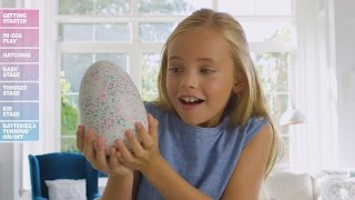 Hatchimals Disappoint Many Families Who Say Hyped-Up Toys Didn't Hatch