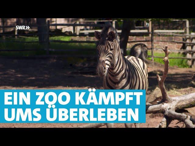 Schwere Zeiten für Mensch und Tier im Zoo Kaiserslautern