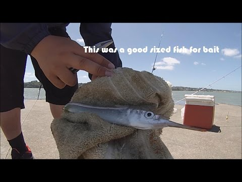 NZ Basic_Fishing | Jetty | Eagle Ray, Piper And Snapper
