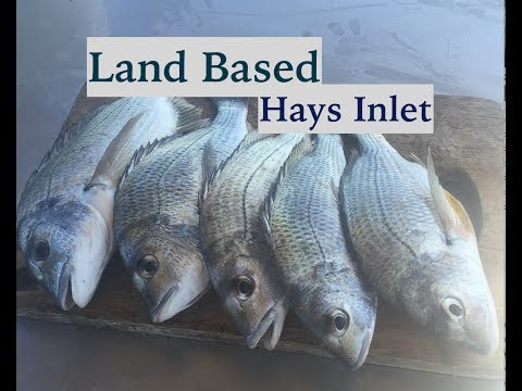 How To Catch Bream On Bait, Land Based Fishing Tips.