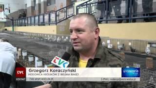 TVK Wieluń - wystawa zwierząt 2015