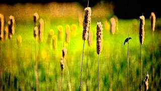 """Green Grow the Rushes, O"" en Esperanto (Verdaj la junkoj)"