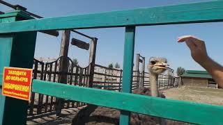 20180827 Золотой Фазан зоопарк, база отдыха в селе Вышковское, Ставище Zoo in Ukraine