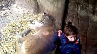 Cougar & Porcupine @ The Turtle Back Zoo West Orange, New Jersey USA : May 12 2018 ---