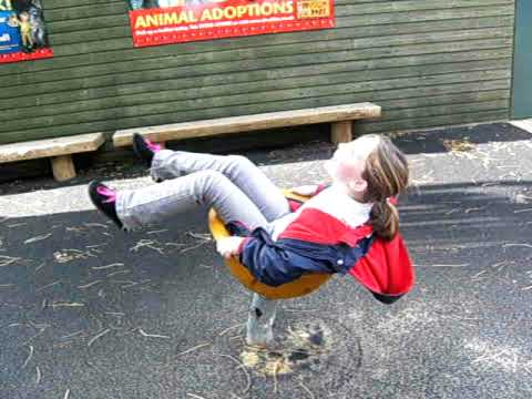 Shola at drusillas, stuck in the turtle shell!