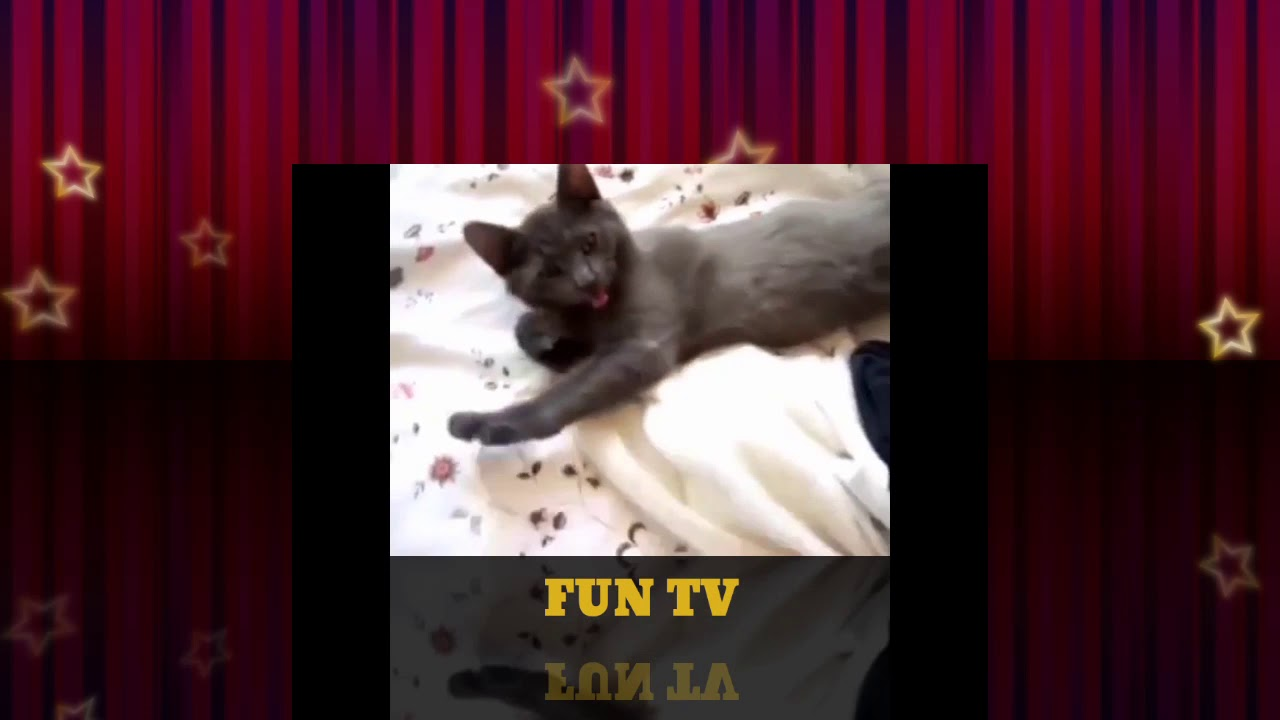 Funny cat want to sleep more
