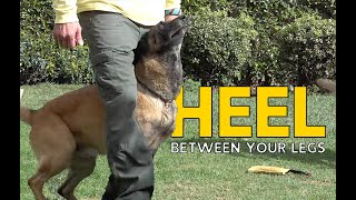 Teach Your DOG to HEEL BETWEEN Your Legs - Dog Training Made Easy and FUN