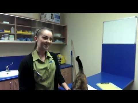Charlotte - Trainee Veterinary Nurse