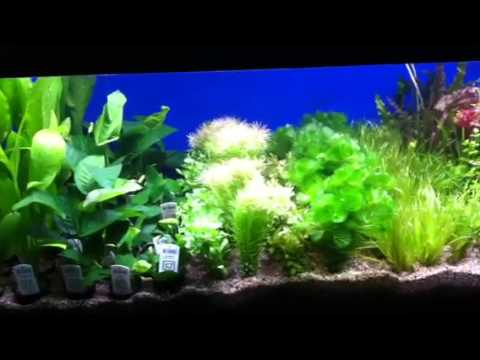 Tropica and Singapore plants at Aquariums West