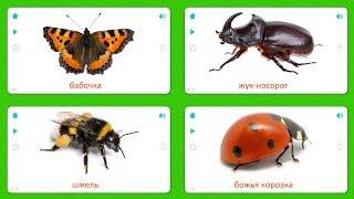 Карточки для детей - Насекомые (33 Карточки) Карточки Домана
