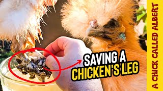 Operating on a Chicken Leg, to save her
