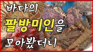 맛과 영양 바다의 팔방미인 멍게,새우,대게 [어영차바다…