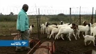 Afrique du sud, AUGMENTATION DU VOL DE BÉTAILS