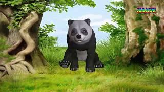 اصوات حيوانات الغابه للأطفال (جونيور في حديقة الحيوان )
